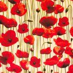 Poppies - Cream